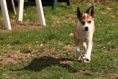 2018-04-24: Hundfotografering