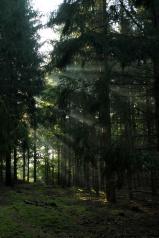 Morgonstrålar